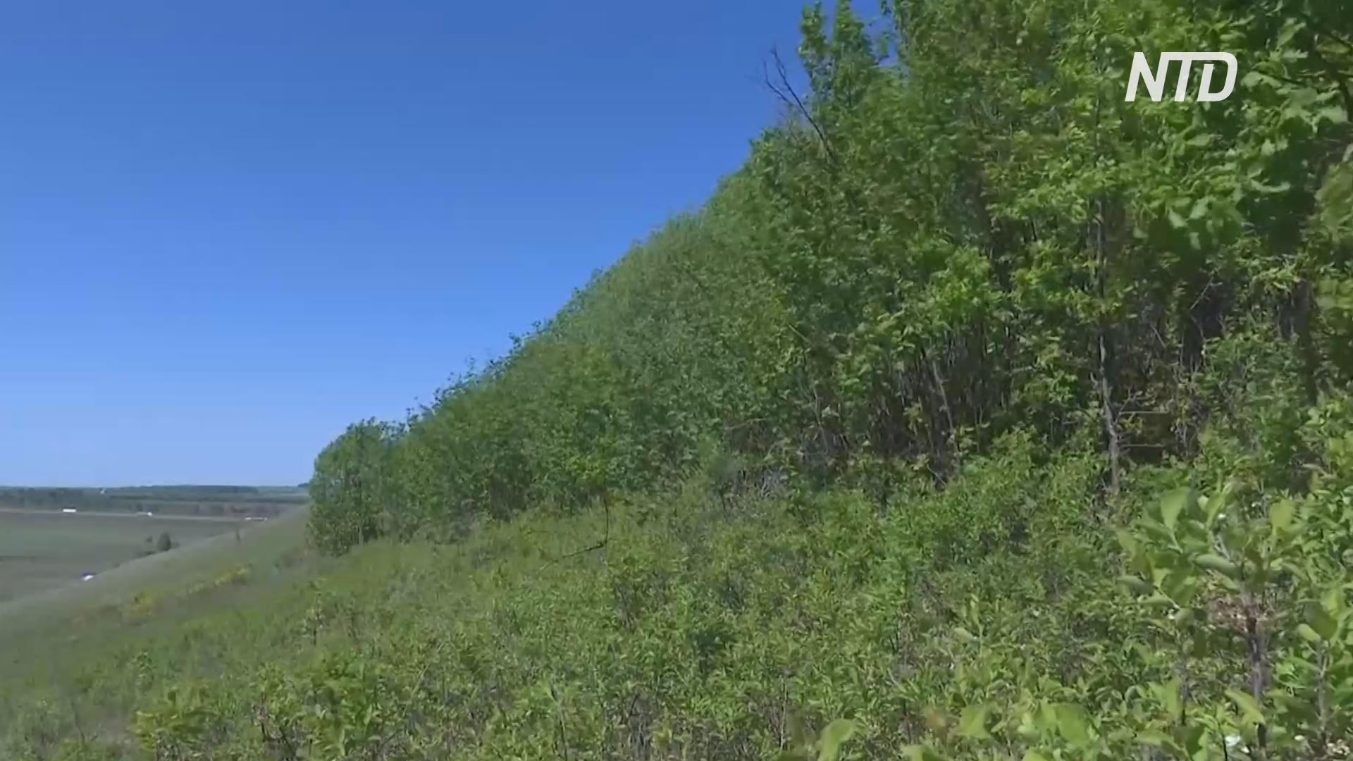 В Татарстане изучают степные дубравы, богатые различными видами растений