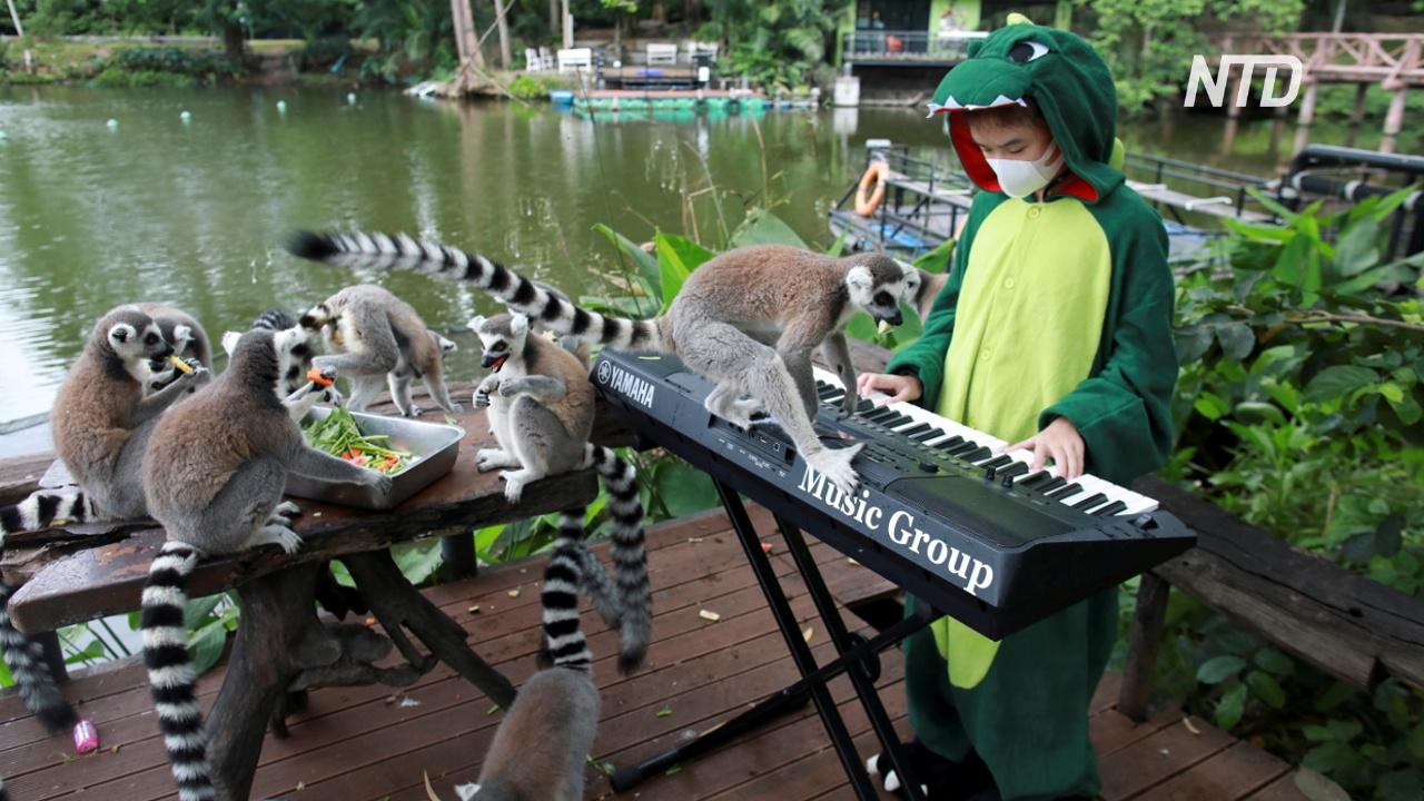 Музыка для зверей: тайские школьники выступают в зоопарке
