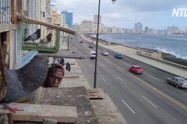 Кубинцы разводят голубей, чтобы не чувствовать себя запертыми во время пандемии