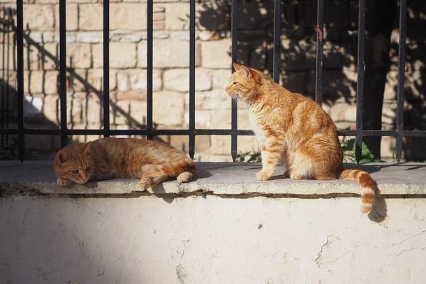 5 3 - Зачем 1000 кошек выпустили на улицы Чикаго