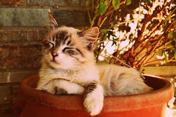 7 2 - Зачем 1000 кошек выпустили на улицы Чикаго