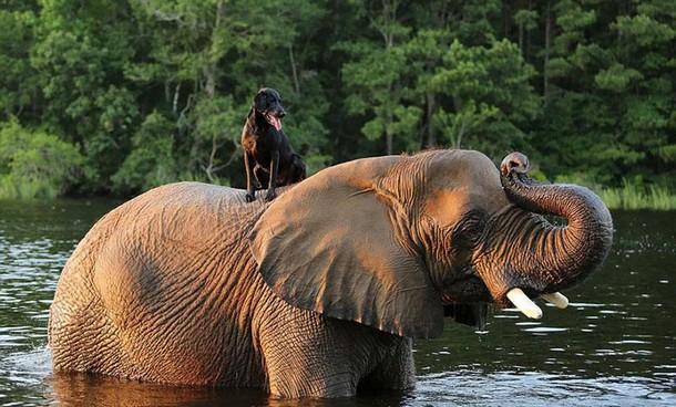 Druzya - Какую игру придумали слон и собака в воде