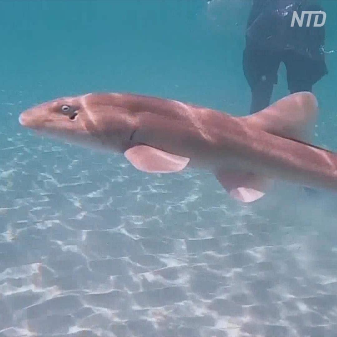 Зоозащитники выпустили скатов и акул в воды Персидского залива