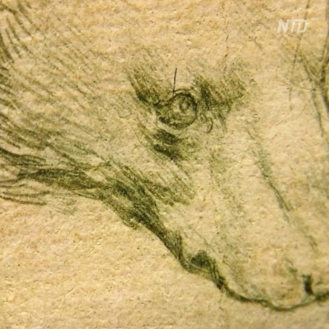 До $16 млн хотят выручить за рисунок Леонардо да Винчи
