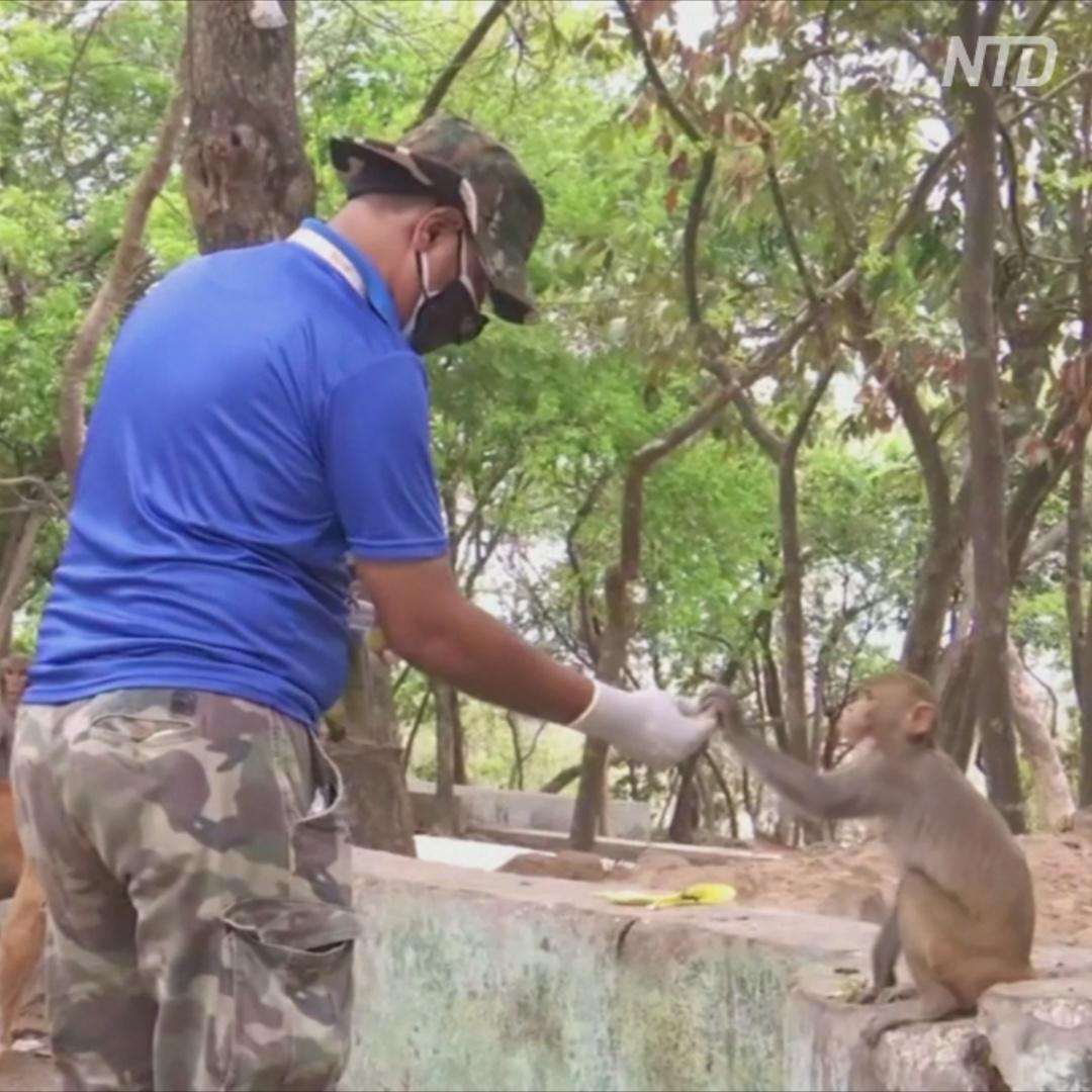 Индийские волонтёры кормят уличных собак, коров и обезьян