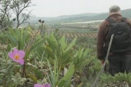 Где находится райское место для орхидей