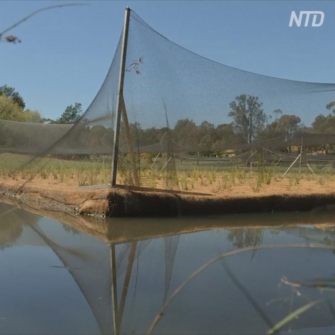 Плавучие острова помогут остановить цветением воды в озере Канберры