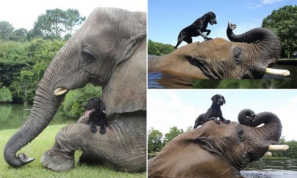 Какую игру придумали слон и собака в воде