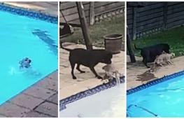Героический поступок пса потряс хозяев
