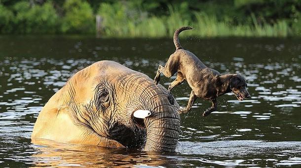i snova oni - Какую игру придумали слон и собака в воде