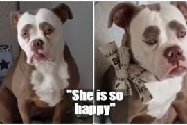 Новая самая грустная собака в Интернете. Видео