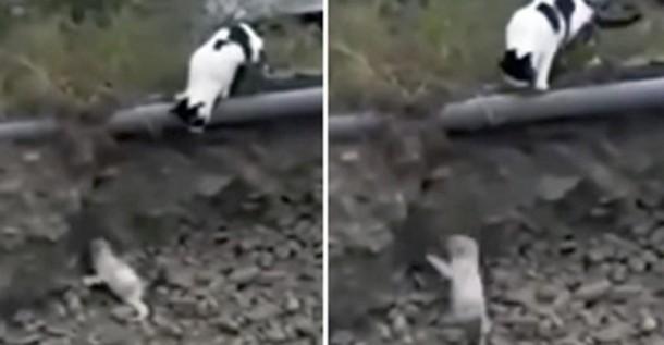 Как кошка спасала щенка