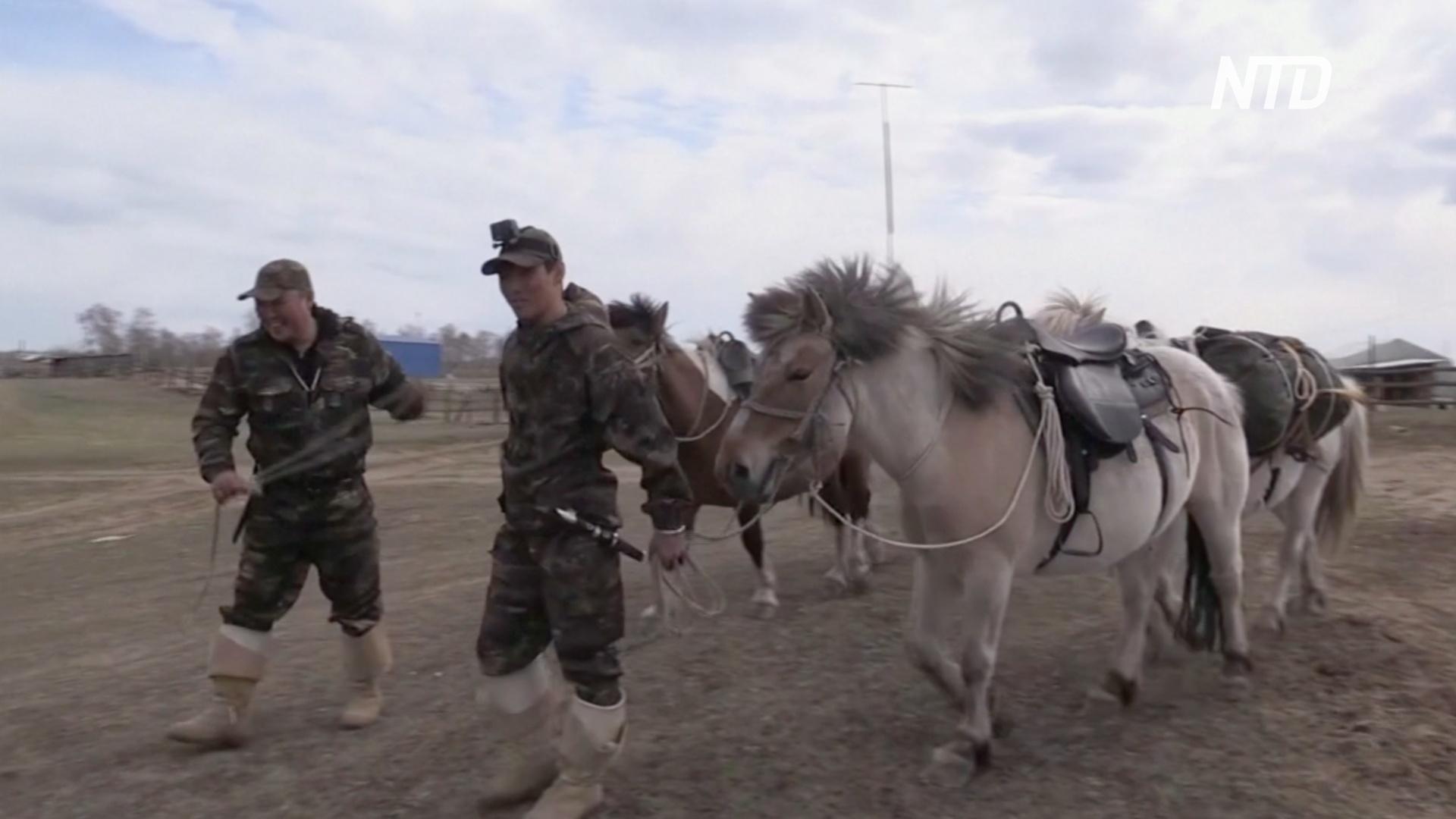 Из Оймякона в Москву: двое якутов отправились в поход на лошадях