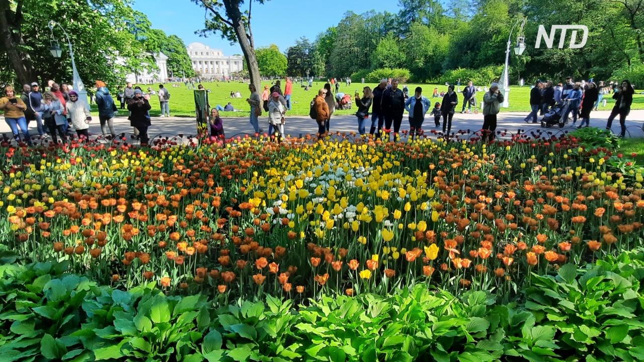 «Фестиваль тюльпанов» прошёл в Петербурге