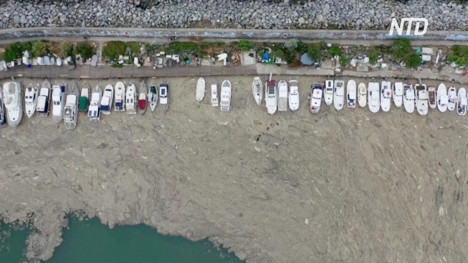 Мраморное море в Турции заволакивает слоем зелёной слизи