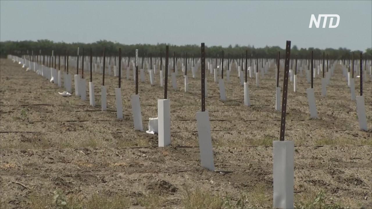 Засуха в Калифорнии: фермеры готовятся к экономической катастрофе