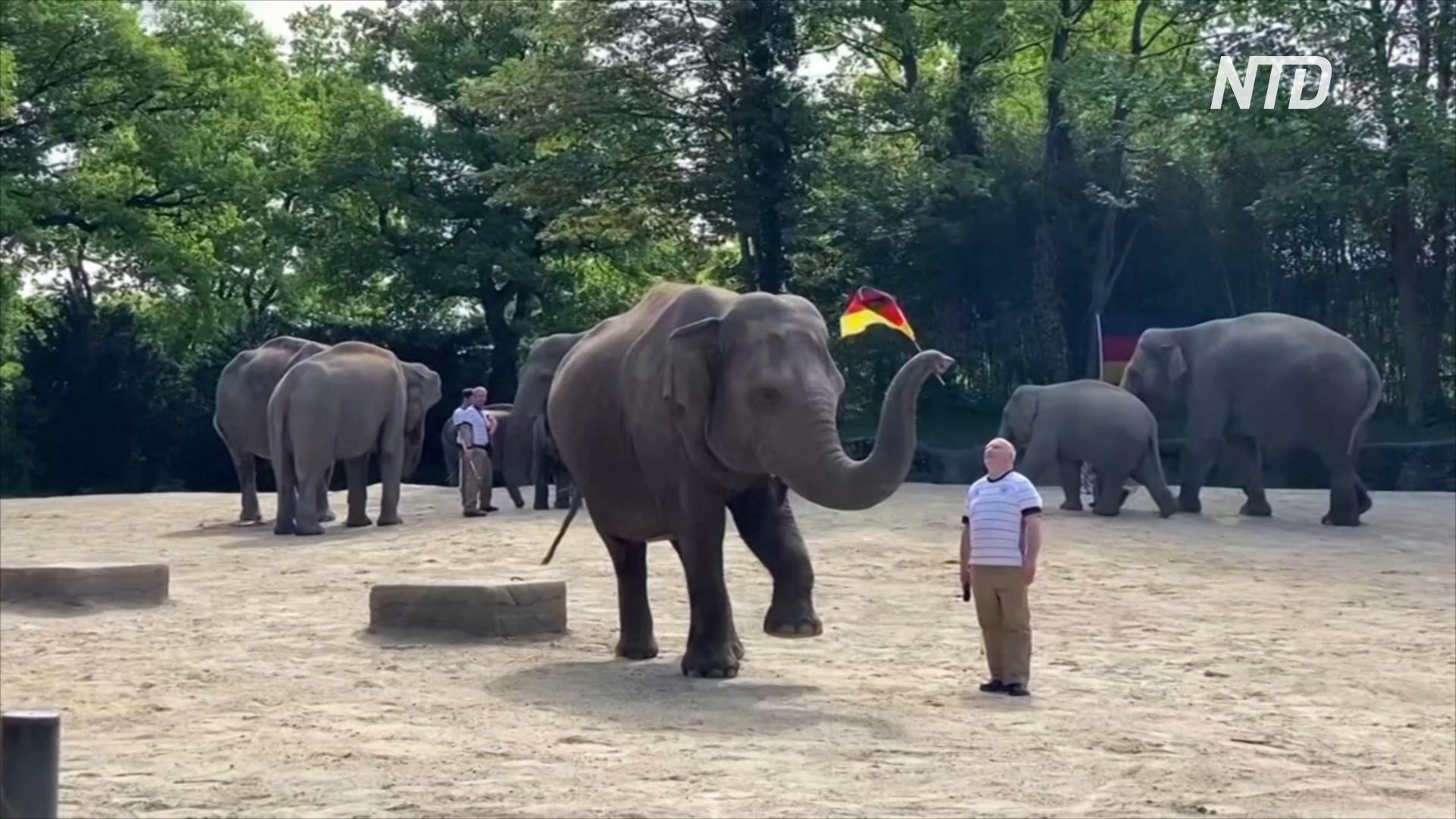 Слониха в немецком зоопарке предскажет победителя матча на чемпионате Европы