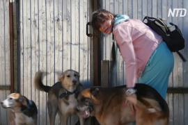 Без клеток и вольеров: петербургский приют создаёт домашнюю обстановку для собак-инвалидов