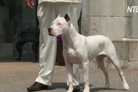 В Вестминстерском дог-шоу будут участвовать ещё четыре породы собак