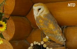 Музей с живыми совами работает под Санкт-Петербургом