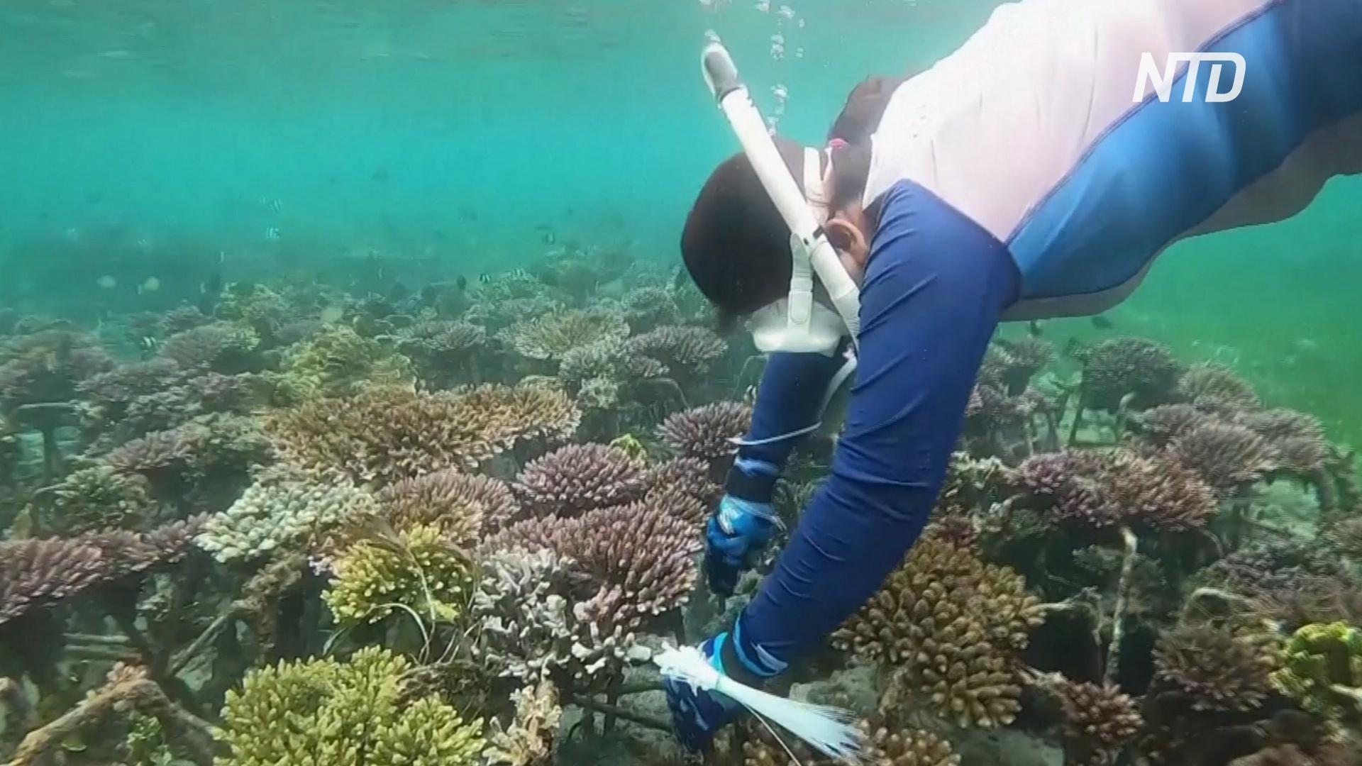 Индонезийка помогает восстановить умирающие коралловые рифы Бали