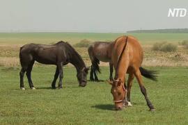 В России приют «Свобода» позволяет лошадям вести почти вольную жизнь