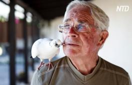 Дедушка и птица: секрет дружбы человека и голубя