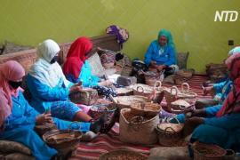«Жидкое золото»: как берберские женщины делают аргановое масло