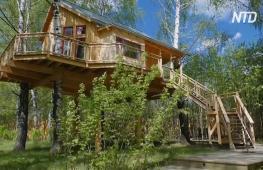 Дома на дереве: как предлагают отдохнуть в Тульской области