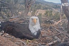 Американцы следят за жизнью птичьих семей через камеры