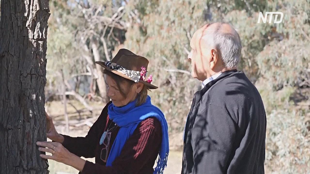 Австралийка сохраняет сандаловые деревья для будущих поколений