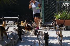Кипр наводнили бездомные кошки