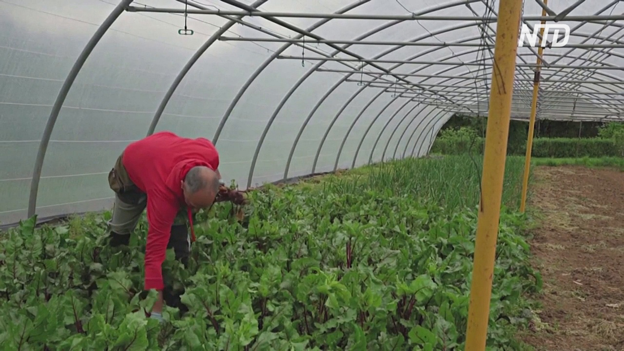 ЕС заключил соглашение об огромных субсидиях для фермерских хозяйств