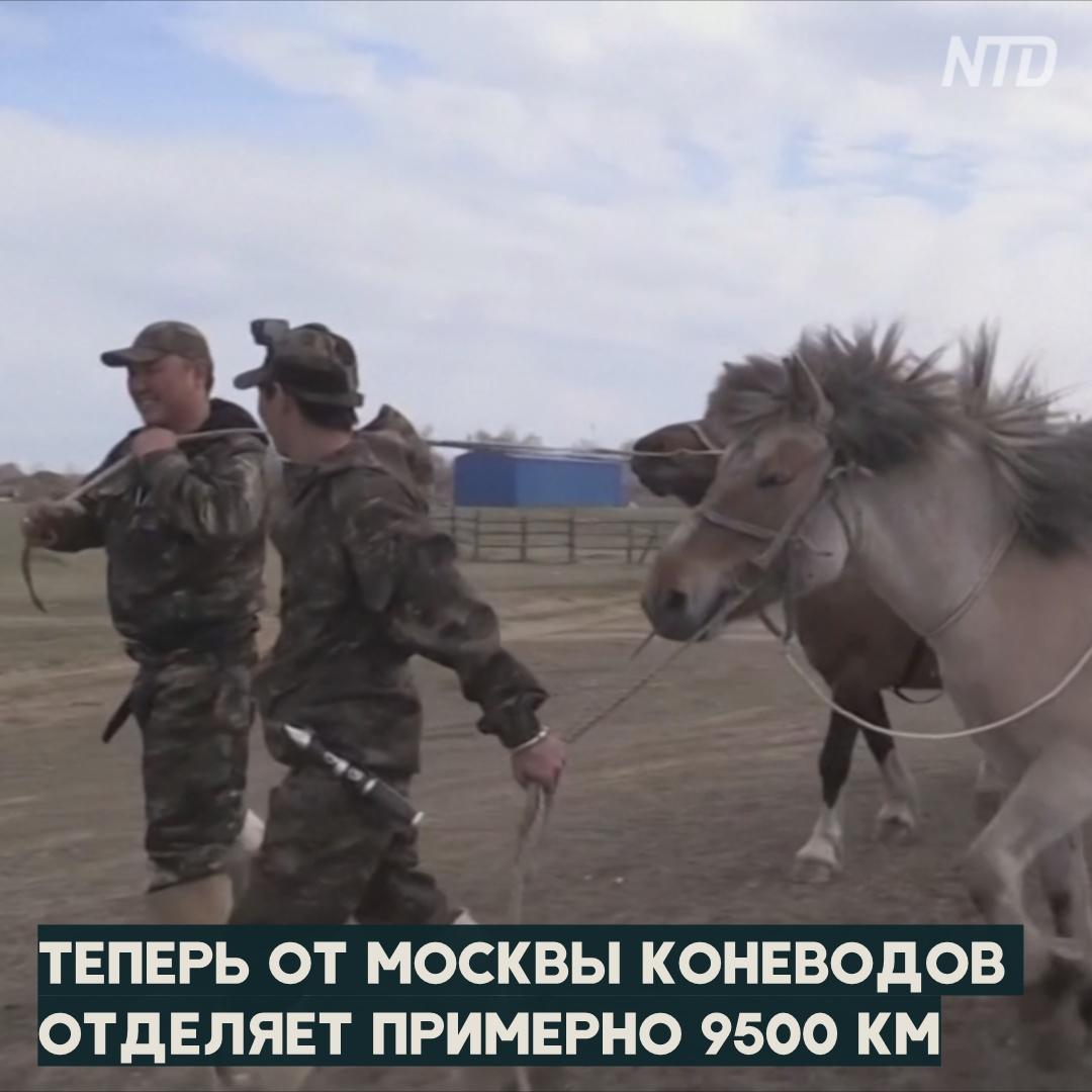 Двое якутов на конях проедут из Оймякона в Москву