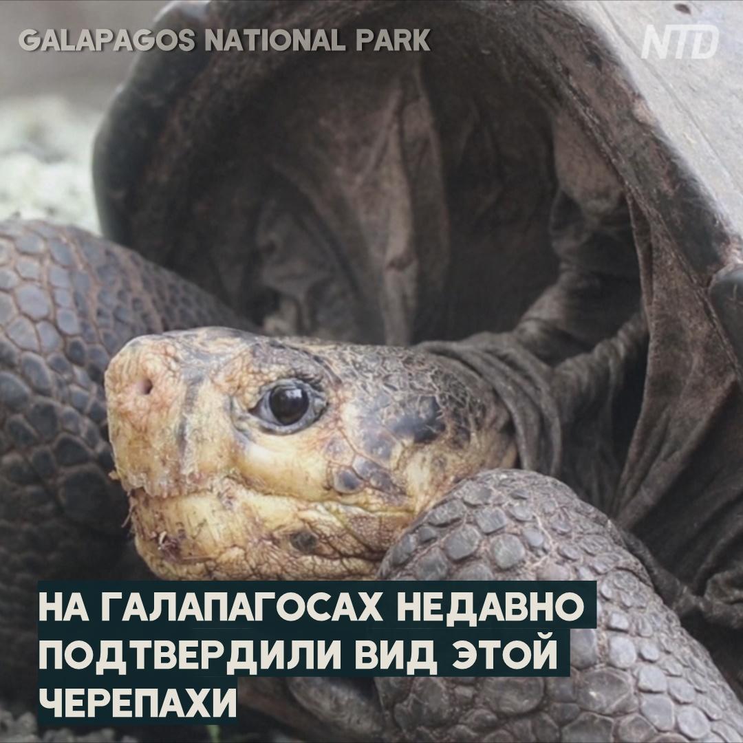 Вымерший 100 лет назад вид черепах снова нашли на Галапагосах