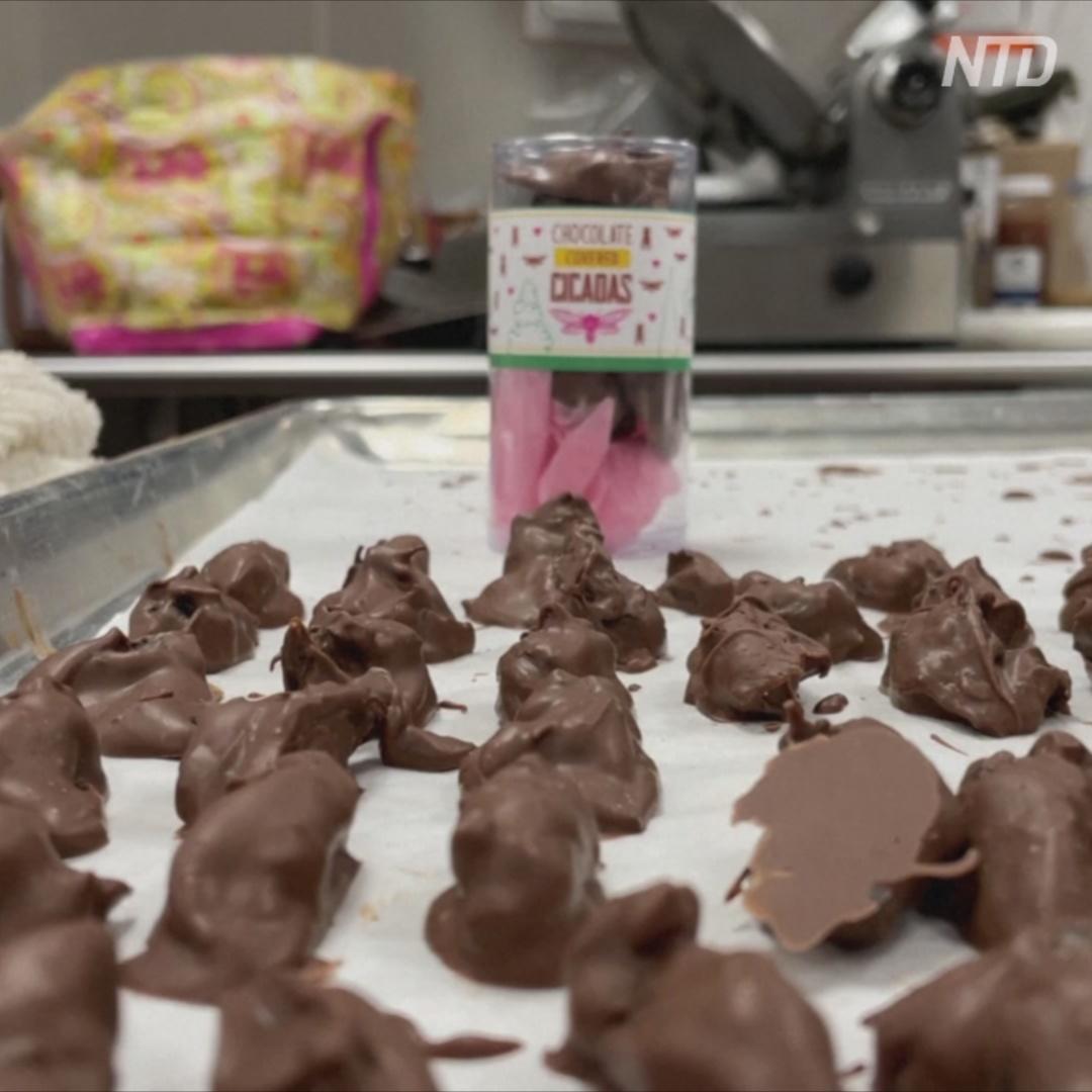 Цикад в шоколаде продают в американской кондитерской