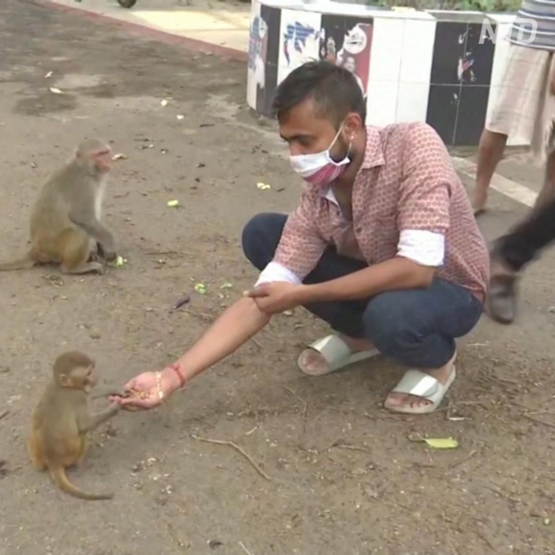 Подкормить обезьян: как индийцы помогают животным во время локдауна