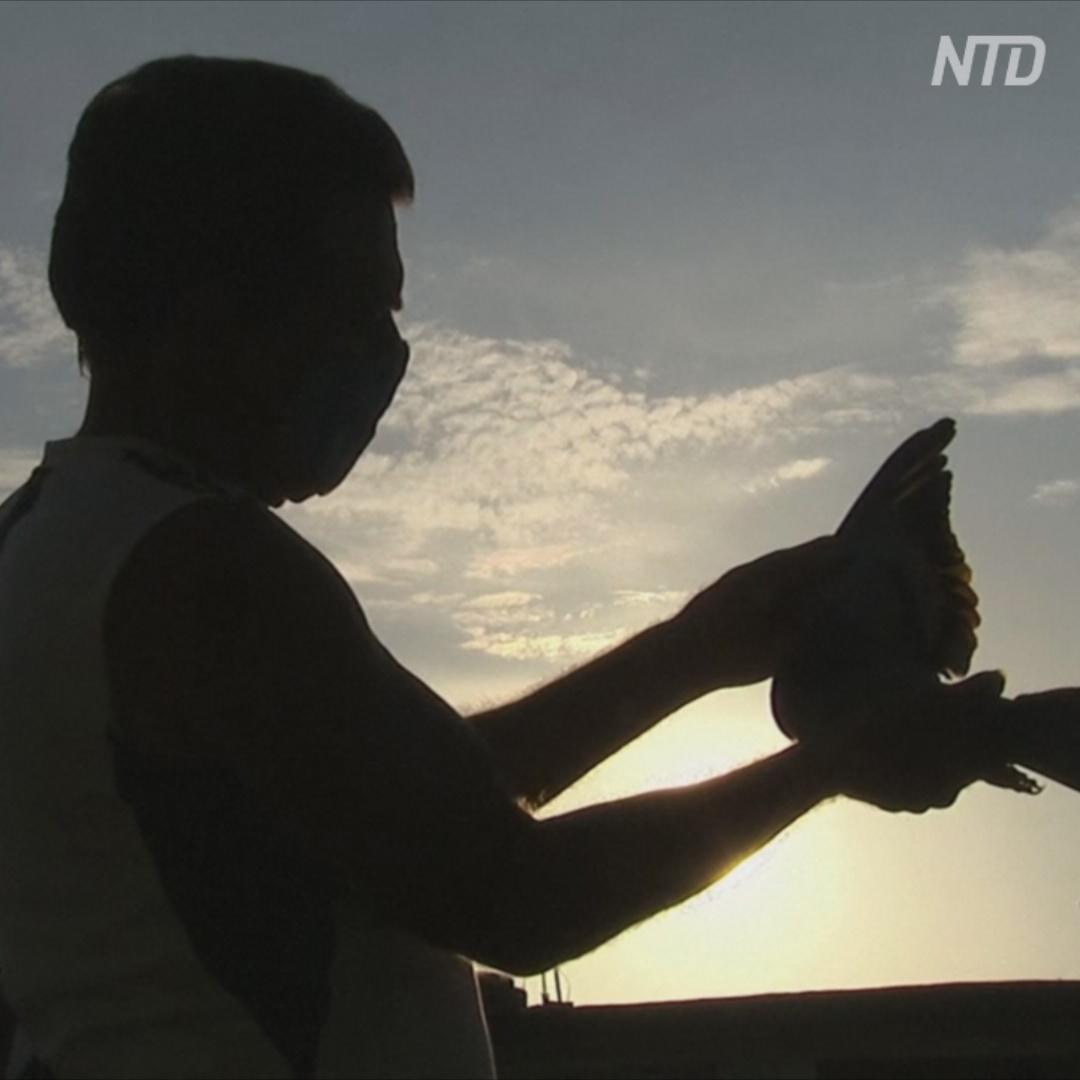 Кубинцы избавляются от стресса, разводя голубей