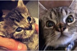 Как растёт котёнок с необычным носом
