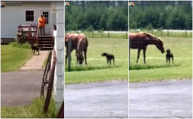Как собака угощала лошадь лакомством