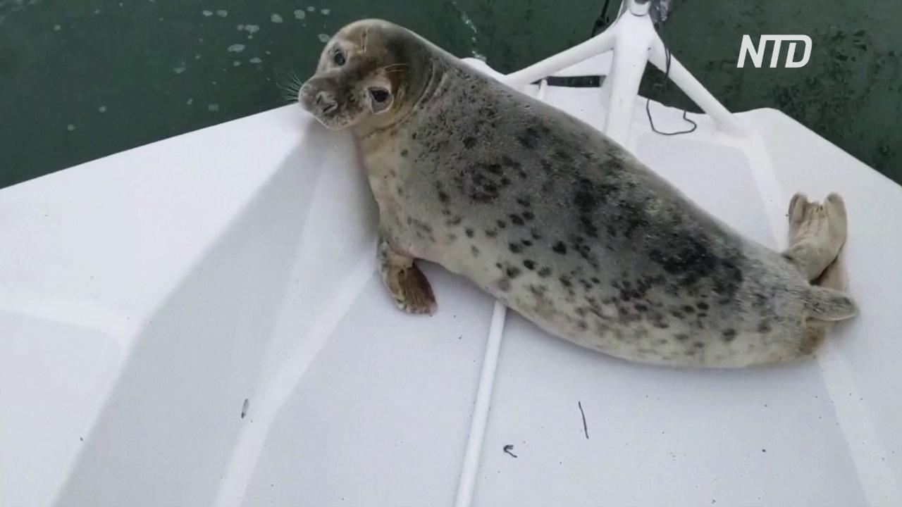 Тюлень стал участником парусной регаты, забравшись на тримаран