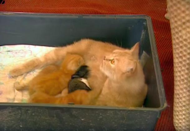 06 - Кто стал мамой для кролика-сироты