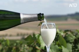 Французские виноделы раскритиковали новый российский закон о шампанском