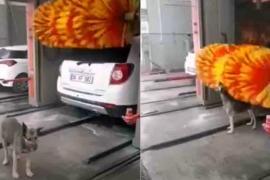 Куда бездомная собака бегает делать себе массаж. Весёлое видео