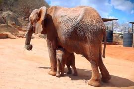 Кого привела слониха на встречу с людьми, которые её спасли