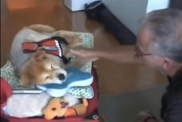 Как помогала 19-летняя собака-терапевт в больнице. Трогательное видео