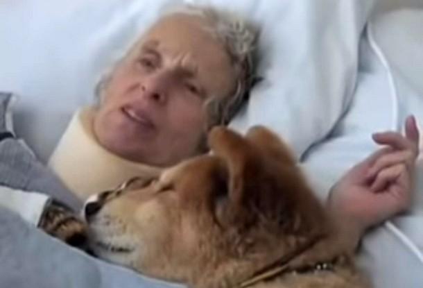 2021 07 23 142734 - Как помогала 19-летняя собака-терапевт в больнице. Трогательное видео