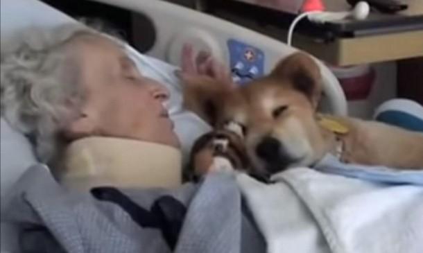 2021 07 23 142826 - Как помогала 19-летняя собака-терапевт в больнице. Трогательное видео