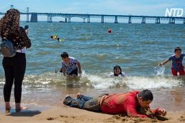 Аномальная жара в Канаде: 480 жертв за 5 дней