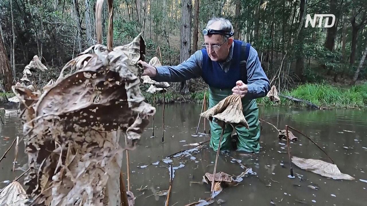 Австралиец научился общаться с лягушками и находить их в природе